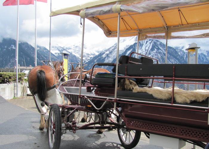 Le cheval en ville