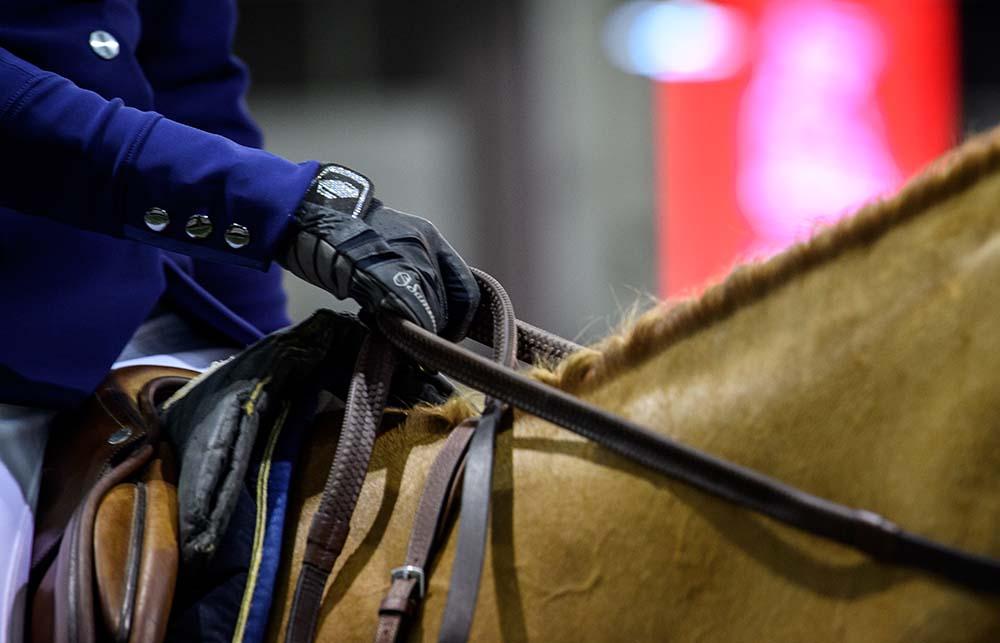 Les chevaux au jumping de Bordeaux