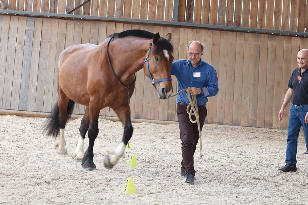Les stages d'entreprises avec le cheval