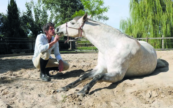 La formation avec Alter Horse