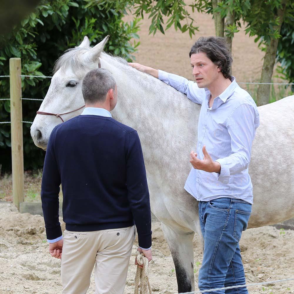 La formation des dirigeants d'entreprise par le cheval