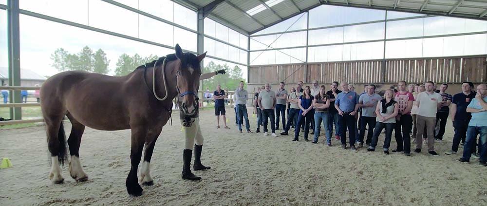 Les séminaires avec le cheval