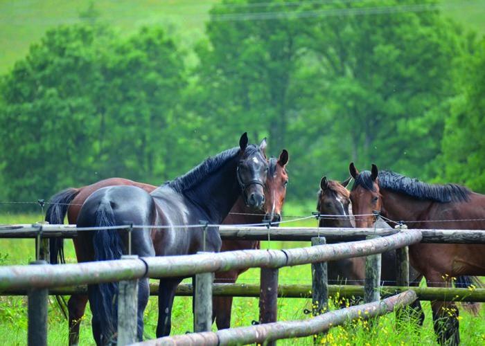 La mise au paddock du cheval de sport