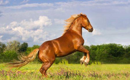 Les fractures chez le cheval par Equitom