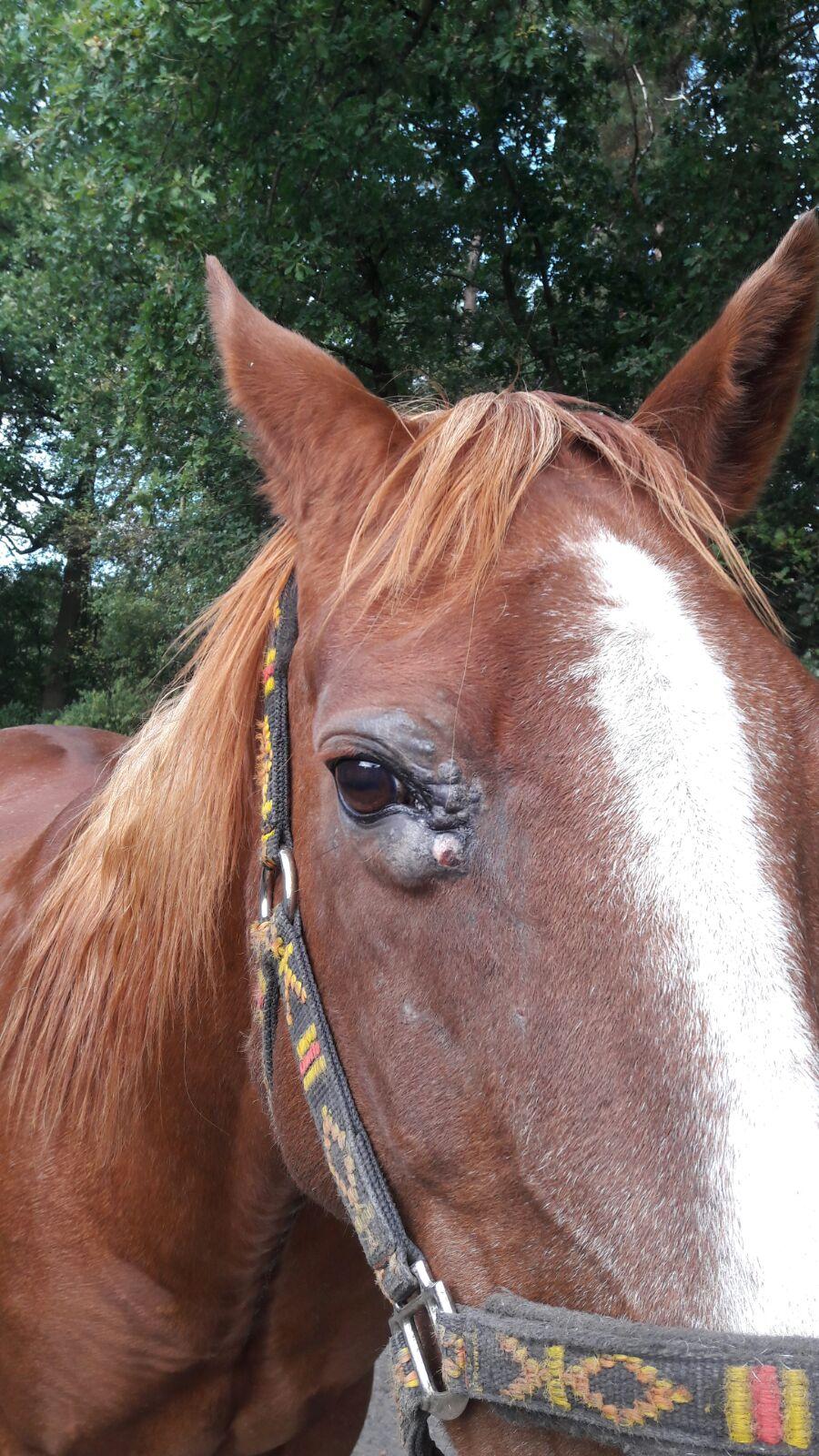 Forme mixte du sarcoide chez le cheval