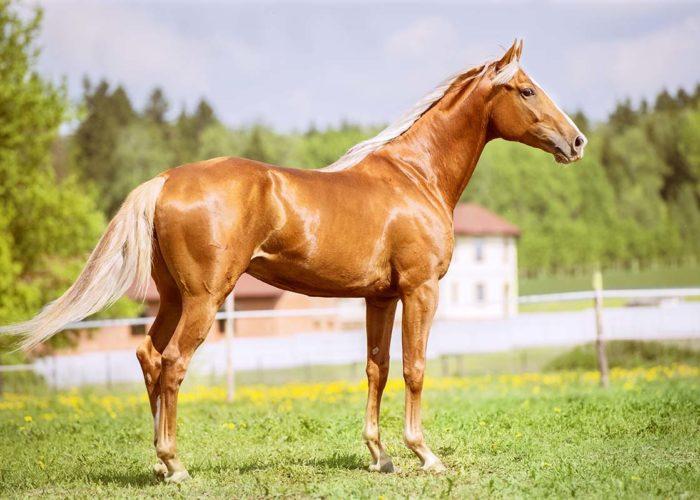 La gamme des suppléments pour les chevaux
