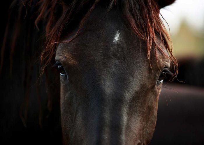 Tout sur les sarcomes chez le cheval