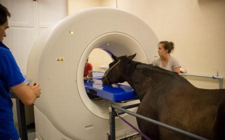 Le scanner pour le cheval