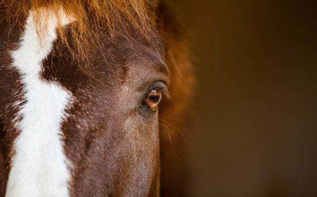 Les émotions du cheval