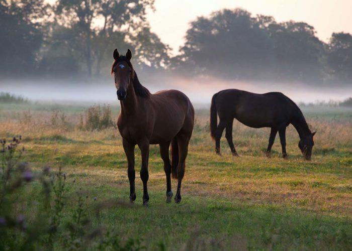 La nature et le cheval