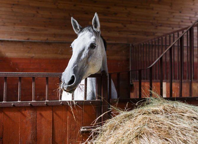 le foin pour le cheval