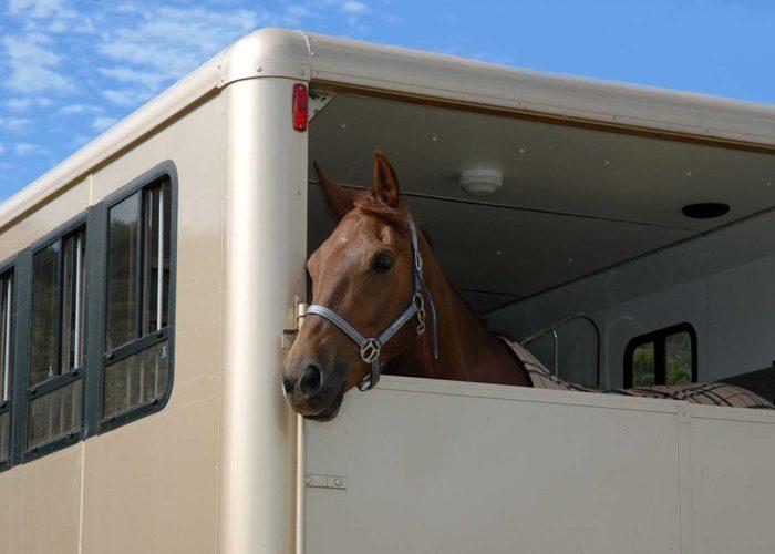 Le transport des chevaux