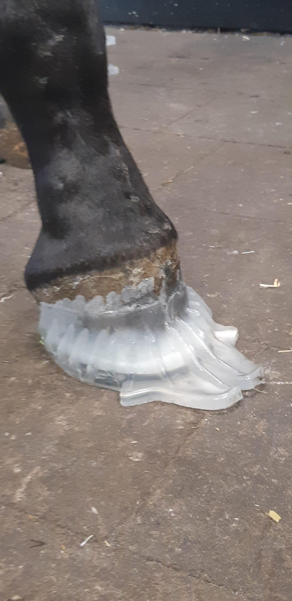 Les pieds du poulain