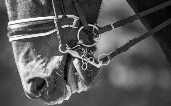 Les dents du cheval