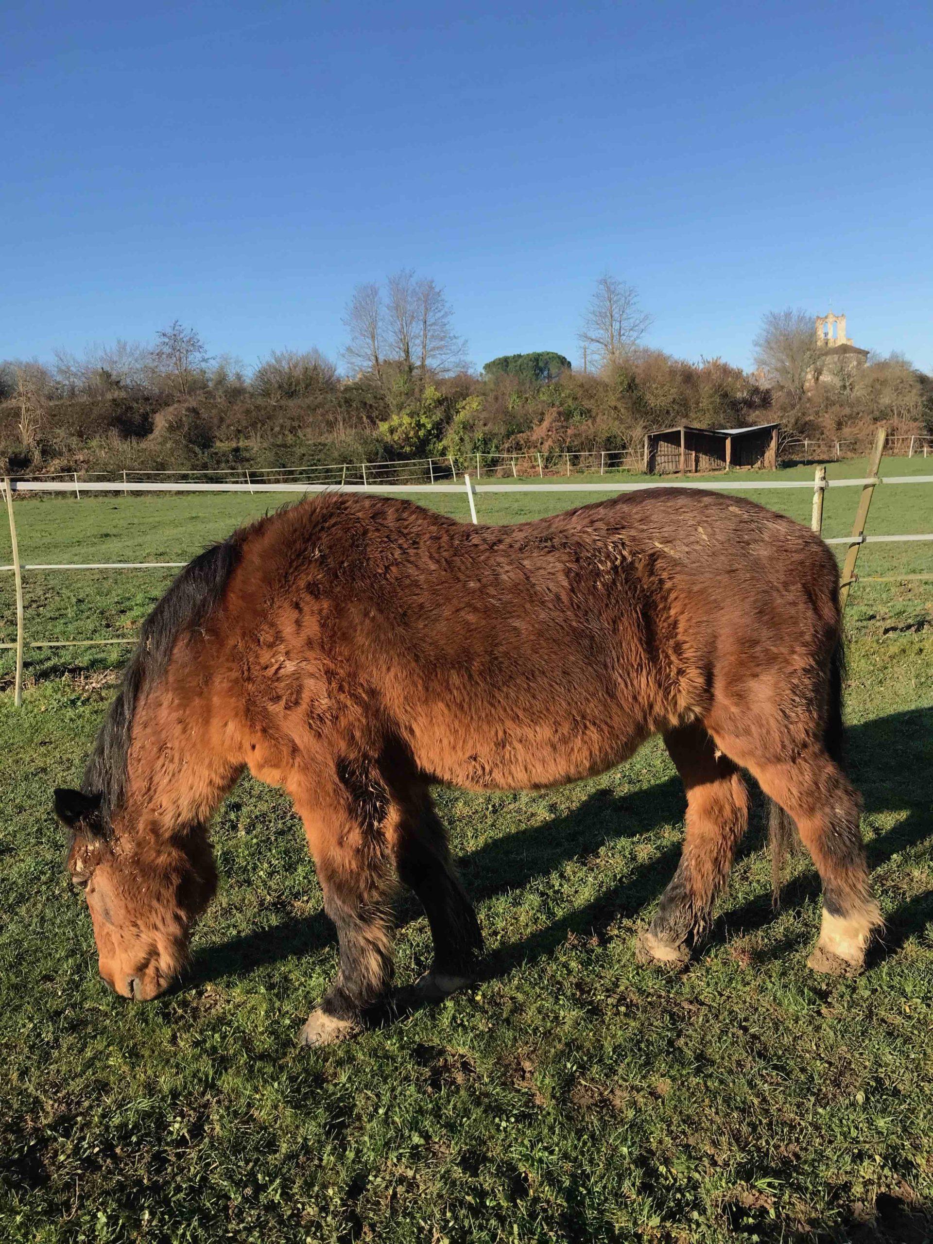 La toux du poney