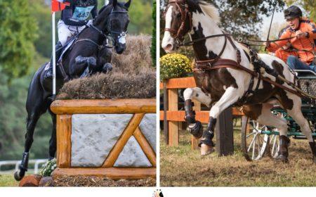 Le cheval aux 5 Etoiles de Pau