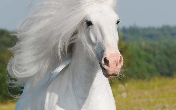 Les produits EKIN pour chevaux