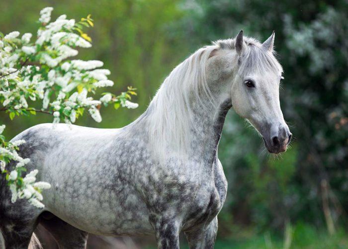 Les produits EKIN pour les chevaux