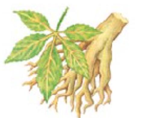 Les plantes pour le cheval par AJC Nature