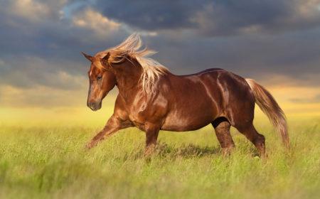 Les plantes pour le cheval