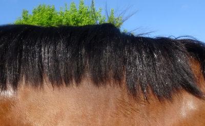 Le spray répulsif insectes Centaura pour cheval