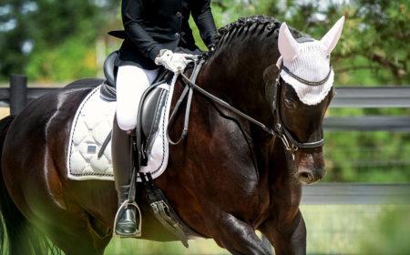 L'alimentation du cheval avec Havens
