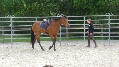 Le débourrage du cheval par Calliane DECERLE