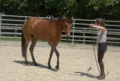 La désensibilisation du cheval par Calliane DECERLE