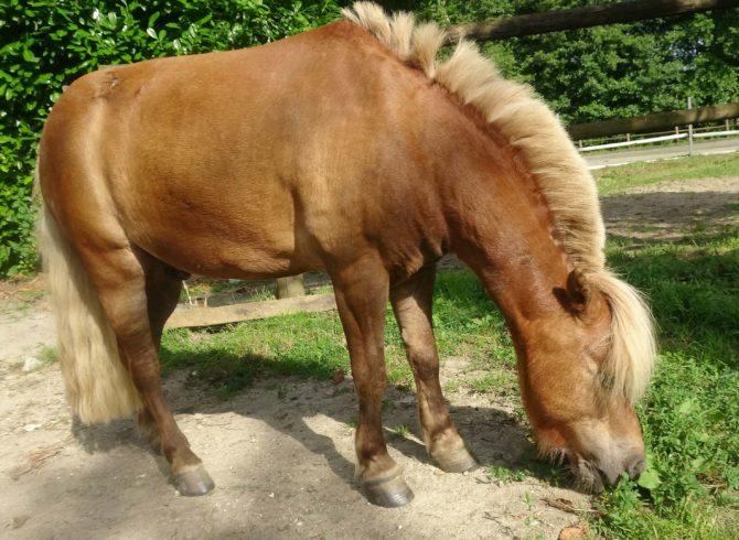 Les produits LO Equilibrium pour les dermites du cheval
