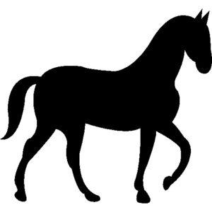 Les bienfaits du travail au pas pour le cheval
